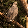 アスンシオン動物園 鳥類篇