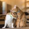 猫の恋愛事情