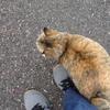 スリスリ猫の花ちゃんと私の認識論