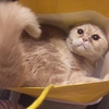 袋ネコとぶりっこ