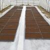 コシヒカリの播種作業を終えました。プール育苗で播種量は70gです。