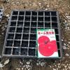 作物No.4 大玉トマト『ホーム桃太郎』を家庭でセルトレイ育苗したら管理しやすい
