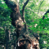熱田神宮の木漏れ日