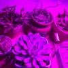 🌵我が家に植物育成ライトがやってきた🌵