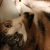 【愛猫日記】毎日アンヌさん#4