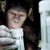 「NO!!」:映画評「猿の惑星:創世記ジェネシス」