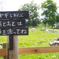 【厚沢部町】看板ヤギのいる美味しいカレー店で絶品ランチ/コーヒーとカレーの店 カンペシーノ