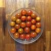 誤算…家庭菜園のミニトマトが採れすぎてしまう件…