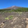 【速報】小4の次男と富士山日帰り登頂成功(須走コース)