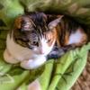 【愛猫日記】毎日アンヌさん#150