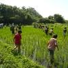 田んぼの雑草と生き物たち