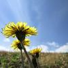 春の色と午後の空