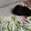 ロッチャンと寝れて幸せよ。