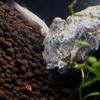 初めての熱帯魚(3)最初の脱落者・・・!
