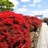 【京都】長岡京市、『長岡天満宮』に行ってきました。京都旅行 京都観光 京都花めぐり 旅気分