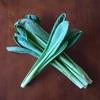 【簡単レシピ付き!】女池菜の美味しさについて語ろうか