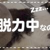 【猫が寝ている #40】