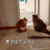 雨田甘夏、蚊取りにゃんこです。【猫と虫さんと蚊事情】
