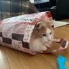 袋が大好きな猫!その名もノル猫ラテちゃん♫