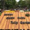 昭和記念公園に行ってきました チューリップガーデンが見頃でした