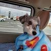 ❝道の駅 季楽里あさひ❞ 愛犬とおでかけ-千葉県観光🎵  2021年3月19日①