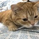 多趣味な猫