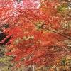 眩しく輝く紅葉の山々