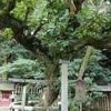 宗像大社の御神木