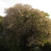 桜の里「私市」