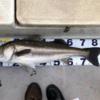 2020年の釣り振り返り!(9〜12月)+釣具代いくらかかったか