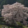 シダレザクラが美しい奈良県宇陀市の又兵衛桜を見に、宇陀松山の薬の館とか森野旧薬園とか桜の季節におススメの観光スポット