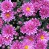 秋の書~菊の香りを添えて~
