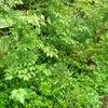 フルフルと揺れている緑達