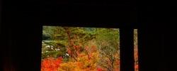 京都の紅葉は早朝に観て回るべし!と思ったけど・・・【 #Radiotalk あり】