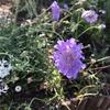 ブルーバタフライに青い蝶々がやってきました