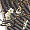 風邪と花粉症のWパンチ