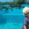 こども動物園の楽しく体験型な周り方