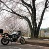 桜ツーリング「常陸風土記の丘」に桜を見に行ってきた(日本一の○○もあるよ!)
