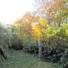 ◆'18/10/21      紅葉の鶴間池②…荒木沢橋のそばから鶴間池へ