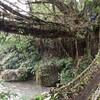 秘境!インドのノングリアット村にある「生きている木の根っこ橋」を目指して!1日目