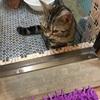 湯河原温泉 ジル(猫)と初旅行 最終日~無事家に帰ってきました!