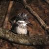 2012年野鳥回顧カレンダー