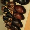 革靴の王様は?!〜革靴の種類・タイプ分類まとめ〜 1日目
