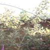 秋の朝一庭作業