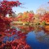 【京都紅葉巡り*1】名所1位の紅葉は圧巻!秋の絶景を堪能してきた〜永観堂・南禅寺・高台寺・圓徳院