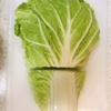 白菜巻き2種弁当