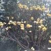 急に来た春