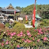神泉苑の山茶花。