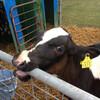 牛…そしてサーモン