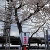 鉄道の日常風景20...京阪で八幡の背割堤へ20190402